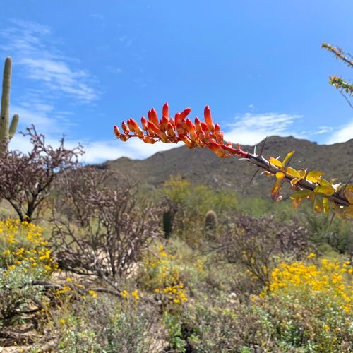 Tortolita Mountains Wild Burro Trail
