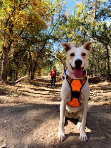 Dog Friendly Hiking in Show Low